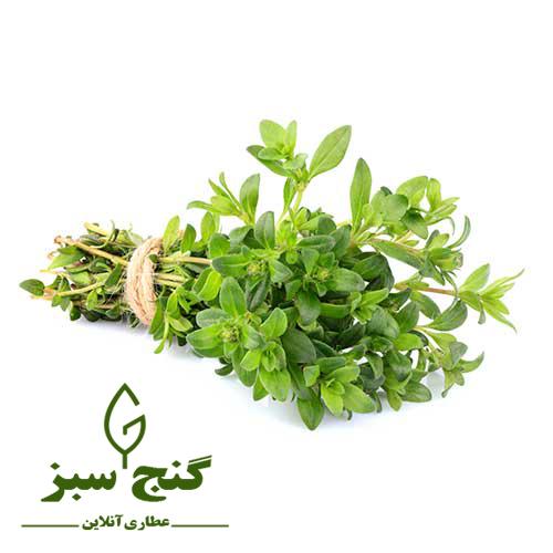 آویشن - گنج سبز